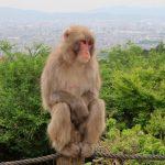 Iwatayama Monkey Park – Arashiyama, Kyoto, Japan